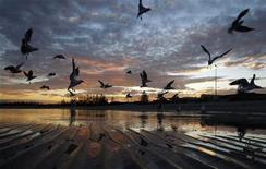 <p>Seagulls are seen silhouetted against the sunset at the seaside suburb of Altona in Melbourne June 23, 2010. REUTERS/Mick Tsikas</p>