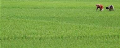 <p>Индийские фермеры собирают урожай, 3 сентября 2009 года. Лингвисты, специализирующиеся на исчезающих языках, сообщили об открытии нового, ранее неизвестного науке языка, на котором говорят всего 800 человек на северо-востоке Индии. REUTERS/Jayanta Dey</p>