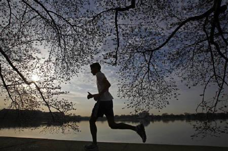 A man jogs under a canopy of cherry blossoms around the Tidal Basin in Washington, March 25, 2010. REUTERS/Jim Young/Files