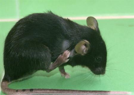 12月3日、動物愛護団体「PETA」が、ネズミの駆除方法が人道的だとして、ニューヨーク市警とシカゴ交通局に「思いやり賞」を授与。写真は昨年8月に撮影(2010年 ロイター)