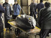 <p>A bluefin tuna, sold for a record price, is moved using a trolley at the Tsukiji market after the New Year's auction, in Tokyo January 5, 2011. REUTERS/Kyodo</p>