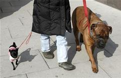 <p>A woman walking her vastly different sized dogs provides a study in contrast in downtown Washington February 25, 2008. REUTERS/Kevin Lamarque</p>