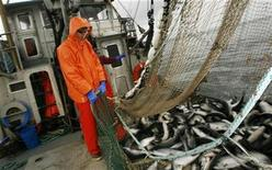 <p>Deck hand Mac Cox works to haul a load of fish into the fish hold of the commercial salmon seining vessel F/V Renaissance in the waters off the island of Kodiak, Alaska August 3, 2008. REUTERS/Lucas Jackson</p>