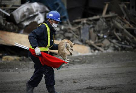 A worker carries a cat as he walks away from rubble of destroyed buildings in Kesennuma, two weeks after the area was devastated by a magnitude 9.0 earthquake and tsunami, March 25, 2011.  REUTERS/Damir Sagolj