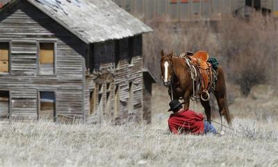 Montana horse drive