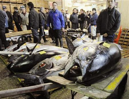 Tunas are displayed at the Tsukiji market after the New Year's auction in Tokyo January 5, 2011. REUTERS/Kyodo