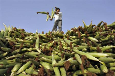 8月15日、世界銀行の7月の食料価格指数は前年同月比33%上昇し、2008年のピークに近い水準を維持。写真はインド・ニューデリーで昨年10月撮影(2011年 ロイター/Mukesh Gupta)