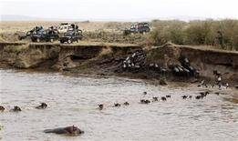 <p>Tourists gather to view wildebeests (connochaetes taurinus) crossing the Mara river during a migration in the Masaai Mara game reserve, 270 km (165 miles) southwest of capital Nairobi, August 25, 2010. REUTERS/Thomas Mukoya</p>