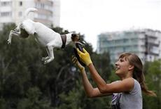 <p>A dog catches a frisbee during the Russian dog frisbee championship in Moscow August 7, 2011. Dogs and their owners took part in a variety of distance and accuracy competitions during the championship to test their frisbee skills. REUTERS/Sergei Karpukhin</p>