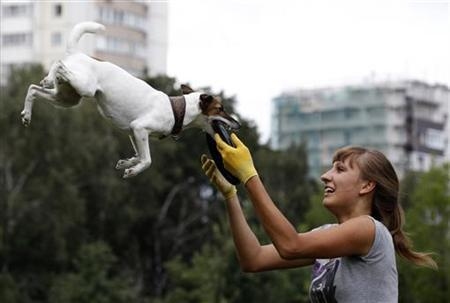 A dog catches a frisbee during the Russian dog frisbee championship in Moscow August 7, 2011. Dogs and their owners took part in a variety of distance and accuracy competitions during the championship to test their frisbee skills. REUTERS/Sergei Karpukhin