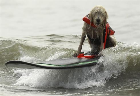 Surf's up, dog