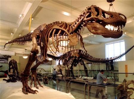 Natural History Museum Nyc For Teenager