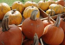 <p>Pumpkins are on display on a self-service sale stand at a farm near Loosdorf, some 80 kilometres (48 miles) west of Vienna, October 14, 2011. REUTERS/Heinz-Peter Bader</p>
