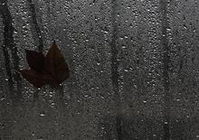 Лист прилип к мокрому стеклу в дождливый день в Берлине, 10 октября 2011 г. Госкорпорация Роснано вместе с Nippon Sheet Glass, Европейским банком реконструкции и развития (ЕБРР) и крупнейшим производителем стеклопакетов в России СТиС вложат около 11,8 миллиарда рублей в создание предприятия по производству высококачественного стекла. REUTERS/Tobias Schwarz