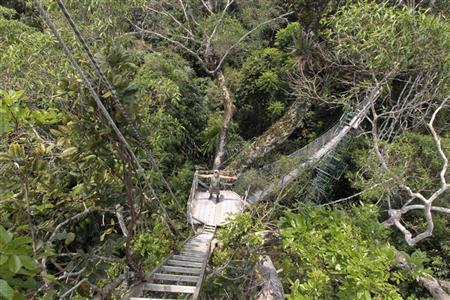 Ecuadorean Mayer Rodriguez, 68, gestures on a suspension bridge over a giant tree at the Yasuni National Park September 9, 2010. REUTERS/Guillermo Granja