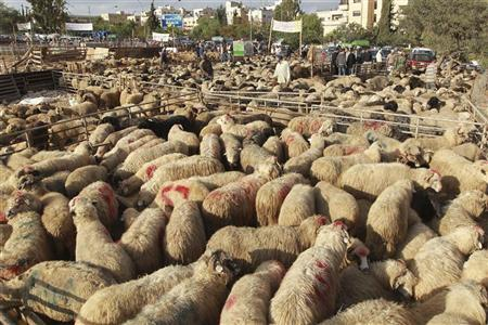 Sheep are displayed for sale at a livestock market, ahead of the Eid al-Adha holiday, in Amman November 5, 2011. REUTERS /Muhammad Hamed