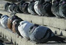 Нахохлившиеся голуби сидят на ступеньках морозным днем в Донецке 18 января 2006 года. Рекордные за последние пять лет морозы до минус 33 градусов Цельсия будут господствовать на большей части Украины в ближайшие 10 дней, сообщил представитель Министерства по чрезвычайным ситуациям. REUTERS/Alexander Khudotioply