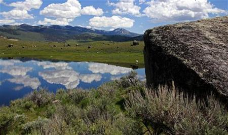 Boulders deposited by a glacial icecap dot the Lamar Valley in Yellowstone National Park, Wyoming, June 23, 2011. REUTERS/Jim Urquhart