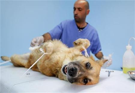 A veterinarian and dog at an animal care center near Amman, November 20, 2011. REUTERS/Ali Jarekji