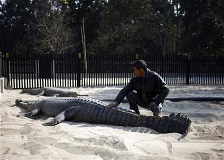 Nepal crocodile farm aims to save endangered species - Reuters