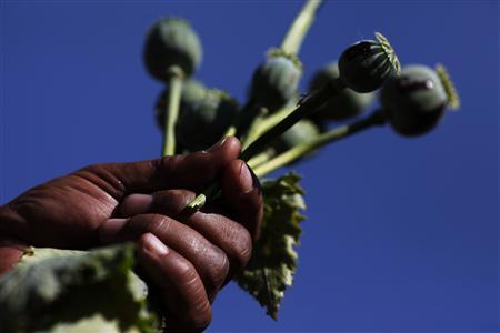 Special Report: Myanmar declares war on opium