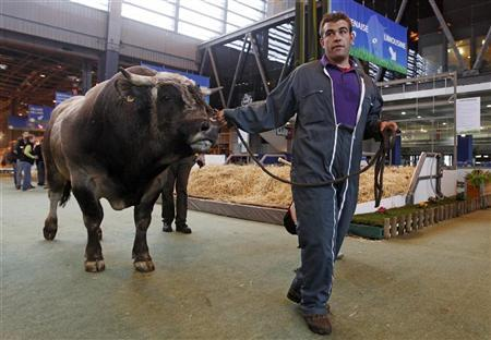 A French farmer leads a bull as preparations continue on the eve of the public opening of the 49th Paris International Farm Show in Paris February 24, 2012. REUTERS/Jacky Naegelen