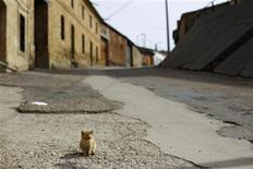 A cat stands on its own in a deserted street in Peleas de Abajo, in northwestern Spain, March 8, 2012. Decades of overspending and accumulated interest on unpaid debt has put Peleas de Abajo 4.6 million euros ($6 million) in the red and the mayor claims it is now the most indebted town in Spain. The town's debt per inhabitant is nearly ten times that of the capital Madrid, working out at nearly 20,000 euros for every resident. Picture taken March 8, 2012. REUTERS/Susana Vera