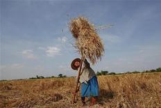 A man works in a rice field in Dala township, near Yangon, November 23, 2011. REUTERS/Soe Zeya Tun