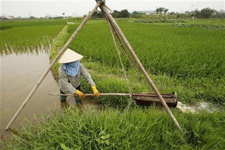 Farmer Nguyen Thi Loi waters a rice paddy field at Ngoc Truc village, outside Hanoi April 18, 2012. REUTERS/Kham