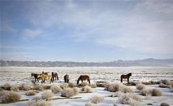 Лошади пасутся в зимней степи у границы с Китаем на северо-востоке Казахстана 16 февраля 2012. Тела 12 пограничников и егеря найдены на сгоревшем погранпосту в Казахстане у китайской границы, сообщила погранслужба. REUTERS/Shamil Zhumatov