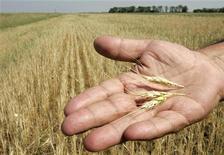 Синоптик Степан Мельничук держит колосья пшеницы на поле в Херсонской области, 15 июня 2007 года. Украина, один из ведущих экспортеров зерна, в сезоне 2011/12 годов увеличила отгрузки зерновых на мировые рынки на 70 процентов до 21,8 миллиона тонн с 12,8 миллиона тонн сезоном ранее, сообщило министерство аграрной политики. REUTERS/Gleb Garanich