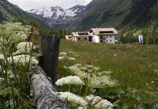 Flowers are seen in front of the Ortler Group mountains in the northern Italian village of Sulden, in Alto Adige (South Tyrol) province July 11, 2012. REUTERS/Dominic Ebenbichler
