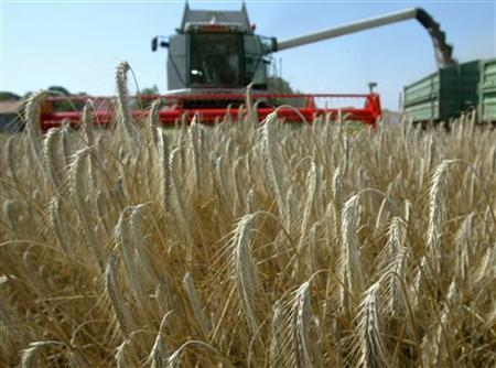 A combine harvester unloads rye on a trailer in a field near the town of Mittenwalde in Brandenburg state some 50 km south of Berlin July 30, 2003.