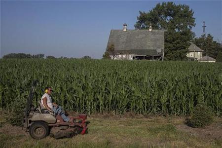 A man mows grass in front of a drought stricken corn field in Welton, Iowa July 12, 2012. REUTERS/Adrees Latif