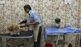A groomer blow dries a dog after it was bathed at a pet grooming salon in New Delhi July 18, 2012 REUTERS/Parivartan Sharma