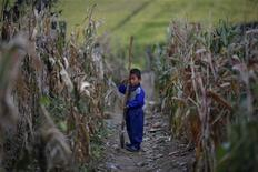 A North Korean boy holds a spade in a corn field in area damaged by recent floods and typhoons in the Soksa-Ri collective farm in the South Hwanghae province September 29, 2011. REUTERS/Damir Sagolj