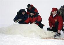 Vladimir Putin (R) assists in polar bear research during his visit to Alexandra Land on Franz Josef Land in the far north of Russia in the Barents Sea April 29, 2010. REUTERS/RIA Novosti/Pool/Alexei Nikolsky