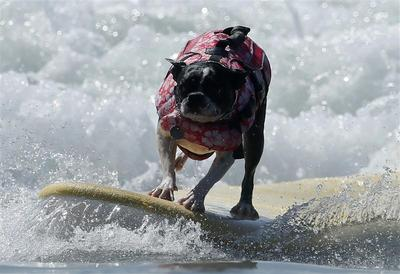 Surfer dogs