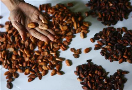 Indonesia's Frankentrees turn cocoa dream into nightmare - Reuters