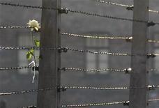 Uma rosa branca é vista entre fios de arame farpado no museu do ex-campo de concentração nazista Auschwitz Birkenau, na Polônia, em janeiro. Wilhelm Brasse, ex-prisioneiro cujas fotografias do interior do campo de morte nazista forneceram um registro histórico arrepiante dos horrores cometidos no local, morreu ao 95 anos, disse uma historiadora do museu, nesta quarta-feira. 27/01/2012 REUTERS/Kacper Pempel