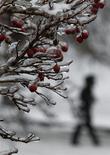 Покрытая льдом и снегом ветка рябины в Москве 26 декабря 2010 года. Промозглая погода с дождем и снегом ожидает москвичей на рабочей неделе, прогнозируют синоптики. REUTERS/Mikhail Voskresensky