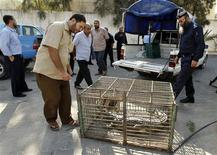 Palestinians look at a crocodile in a cage at a Hamas police station in the northern Gaza Strip November 6, 2012. REUTERS/Ahmed Zakot