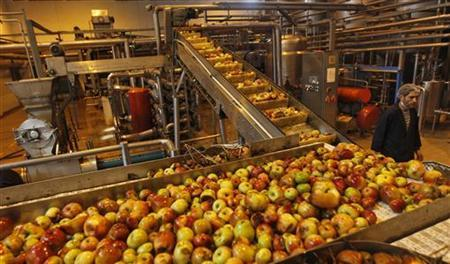 An employee stands next to a processing belt carrying apples inside an apple juice manufacturing unit on the outskirts of Srinagar October 15, 2012. REUTERS/Danish Ismail
