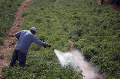 Un estudio sugiere que una lesión de cabeza grave en el pasado y la manipulación de pesticidas es una combinación que estaría asociada con un riesgo muy alto de desarrollar la enfermedad de Parkinson. En la imagen, un granjero palestino fumiga un campo de tomates en el pueblo de Beit Umar, en Cisjordania el 9 de septiembre de 2012. REUTERS/Darren Whiteside