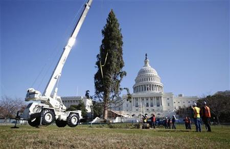 The Capitol Christmas Tree is installed on the west side of the U.S. Capitol in Washington November 26, 2012. The tree is an Engelmann Spruce from Meeker, Colorado, and will be decorated in the coming days for the holidays. It is part of an annual tradition since 1964. REUTERS/Jason Reed (UNITED STATES - Tags: SOCIETY)