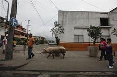 La mayoría de los cubanos no ha pagado impuestos durante medio siglo, pero eso va a cambiar con un nuevo código a partir del 1 de enero. En la imagen, un hombre lleva a su cerdo atado con una cuerda por una calle de La Habana, el 28 de noviembre de 2012. REUTERS/Desmond Boylan