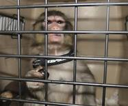 Darwin, the monkey is pictured in this handout photo taken by Toronto Animal Services, December 10, 2012. REUTERS/Toronto Animal Services/Handout