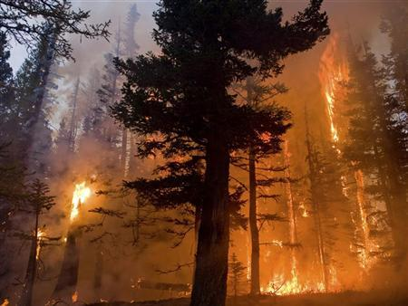 U.S. researchers devise scale to gauge wildfire risk, lessen losses
