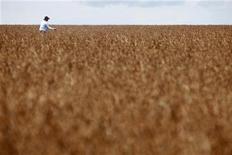 Trabalhador anda em plantação de soja em fazenda na cidade de Tangara da Serra, em Cuiabá. Foto de Arquivo. 27/03/2012 REUTERS/Paulo Whitaker