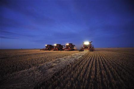 Combines harvest wheat on the Stephen and Brian Vandervalk farm near Fort MacLeod,, Alberta, September 26, 2011. REUTERS/Todd Korol